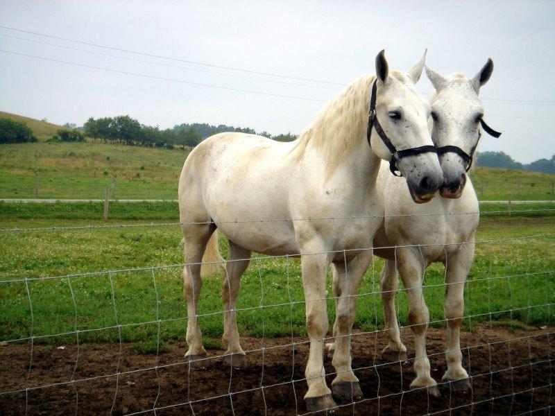 Horses at an Amish farm. This photo could make a beautiful slide